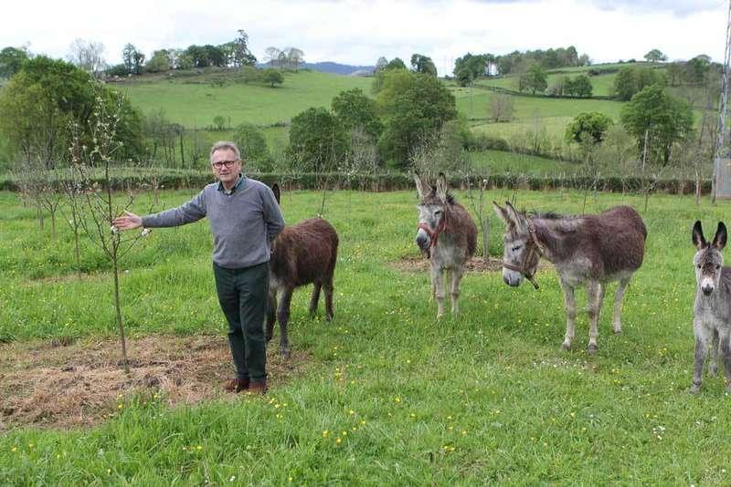 José Vigón en una pumarada de Orizón, con los burros.