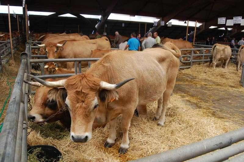 El medio rural asturiano  se da cita en Agrosiero