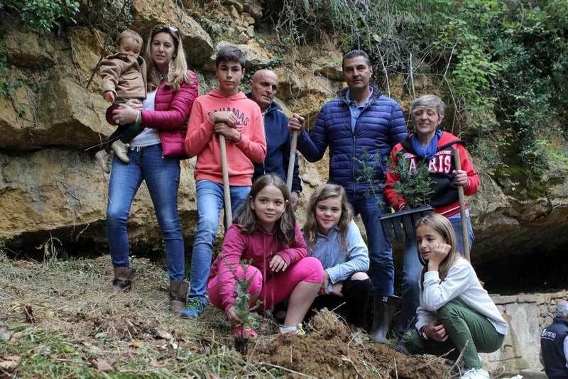 Plantación de texos en Corao Castiellu.