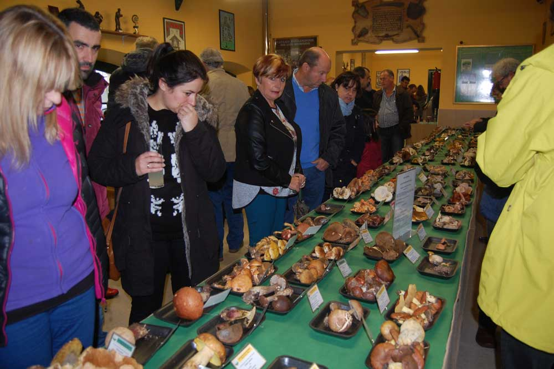Pañeda mostró casi 400 especies de setas