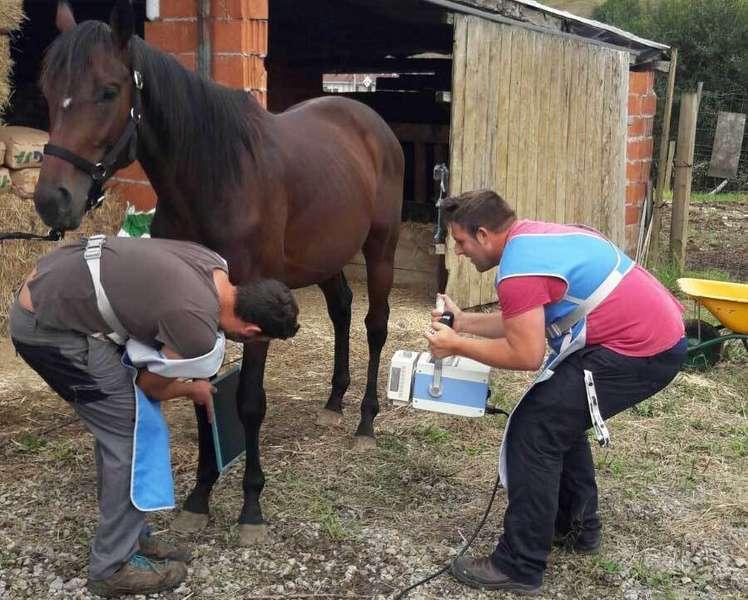 Francisco Madrid es el veterinario de los caballos del Oriente de Asturias