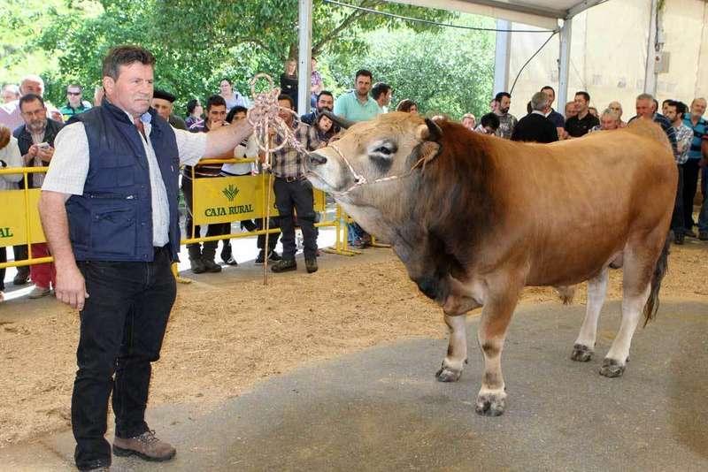 El semental de la raza Casina, Pindal, se subastó por 2.750 euros en Infiesto