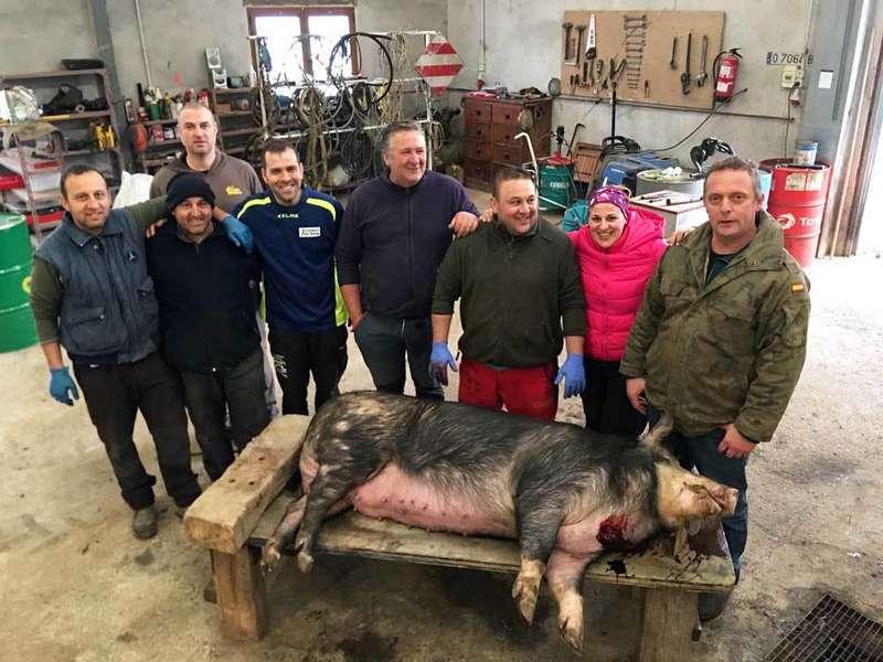 cerdo-gochu-samartín-Cangas-de-Onis