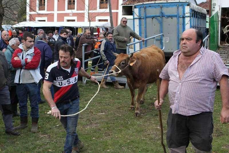Buen ganado y muchos tratos la víspera de la Feria en Corao