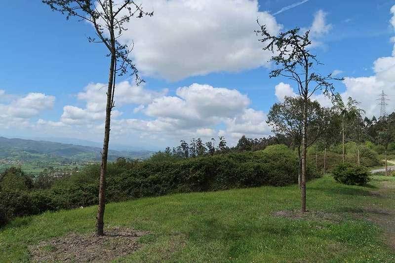 Llanera finaliza la plantación de medio centenar de árboles en el concejo