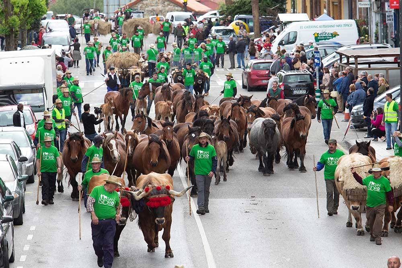 Mercáu tradicional  y feria ganadera en Llanera para celebrar San Isidro