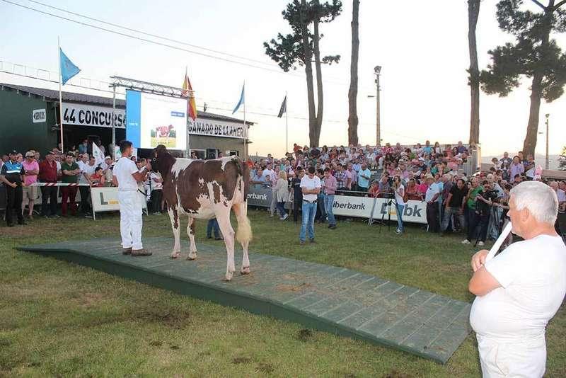 La primera subasta de ganado de Llanera fue todo un éxito