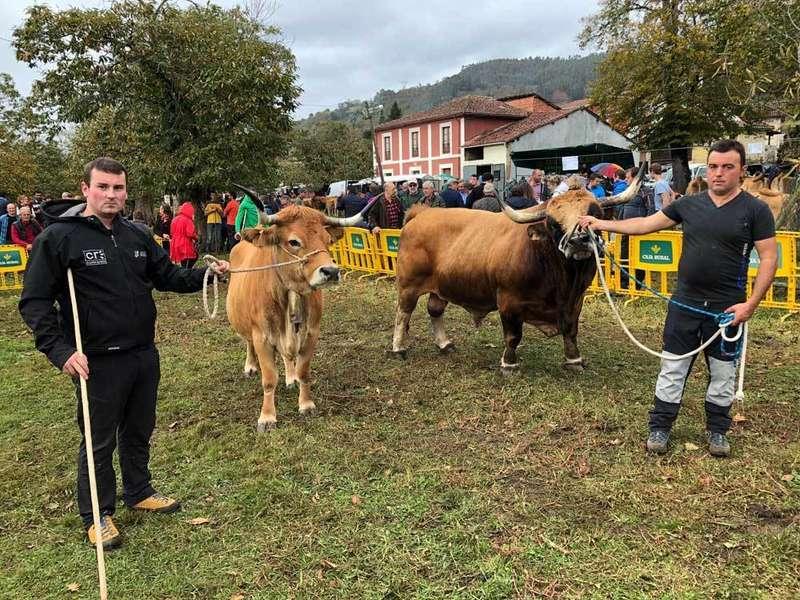 """""""Galana"""" y """"Sandungu"""" se proclaman Campeones de la Raza Asturiana de la Montaña en Corao"""