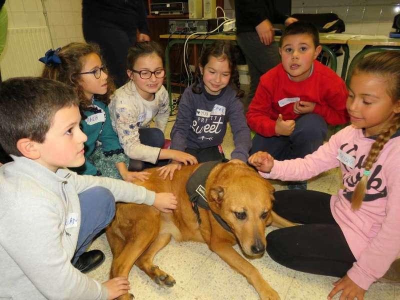 Lección de solidaridad animal en el Colegio de Arriondas