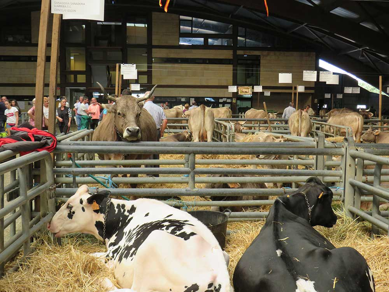 agrosiero-vacas