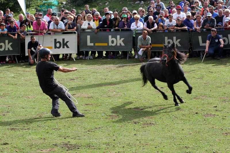 asturcon-caballos