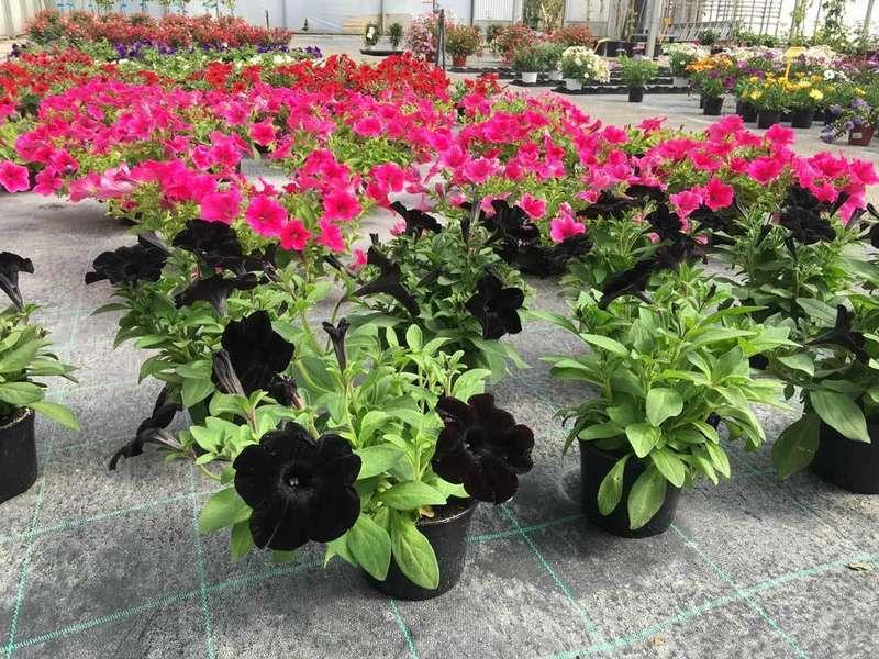 flores-centrojardin-ereba-llanes