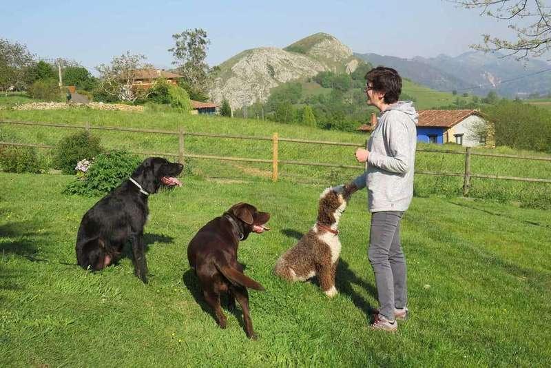 educación-canina-en-positivo-huexes-parres