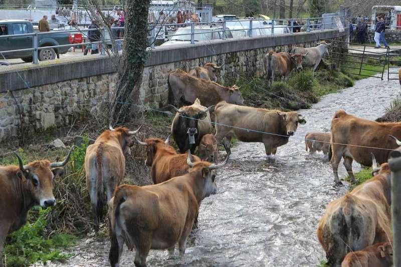 feria-corao-vaques