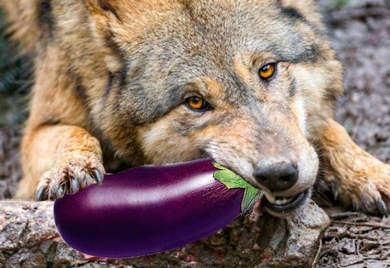 lobo-vegetariano