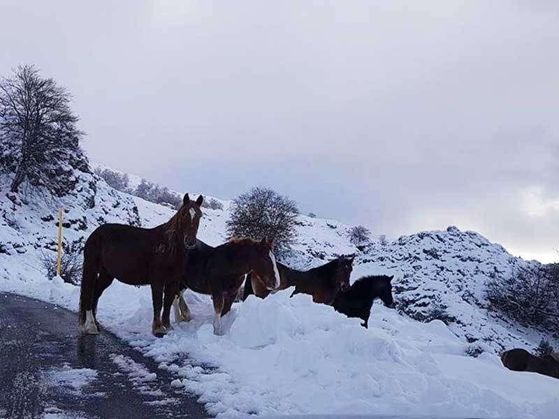 caballos-nieve