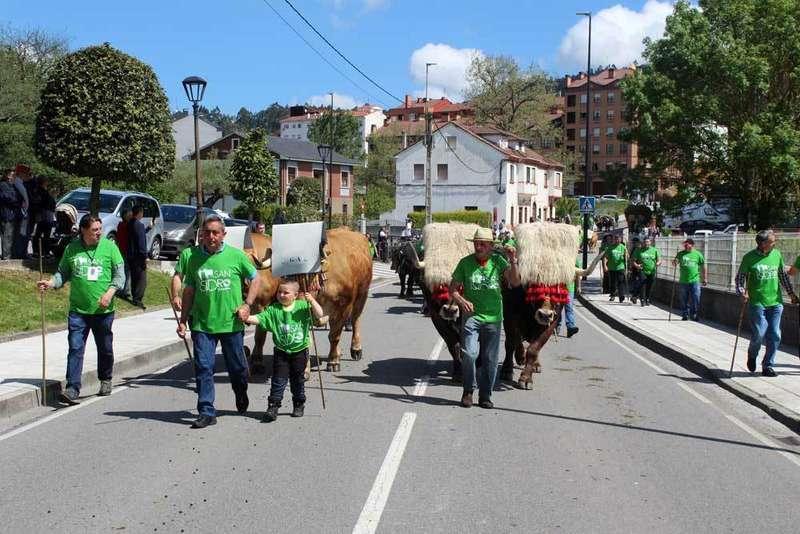 san-isidro-llanera-vacas