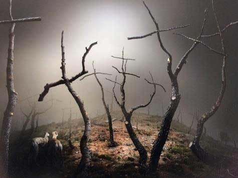 bosque de cruces premio siero
